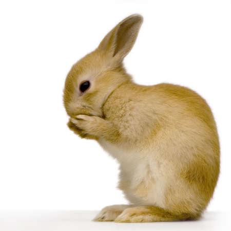 whit: Shy rabbit against whit background Stock Photo