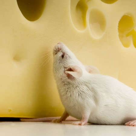 White Mouse in front of a white background Stock Photo - 654056