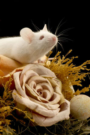 White Mouse in front of a white background Stock Photo - 654055
