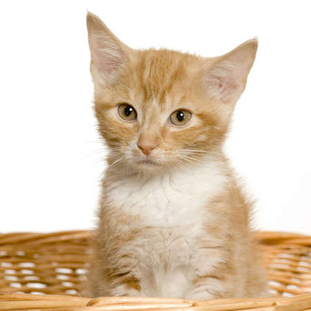 Young cat in the basket in front of a white background photo