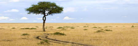 masai: view of a tree in the middle of a plain in the natural reserve of masai mara. Stock Photo