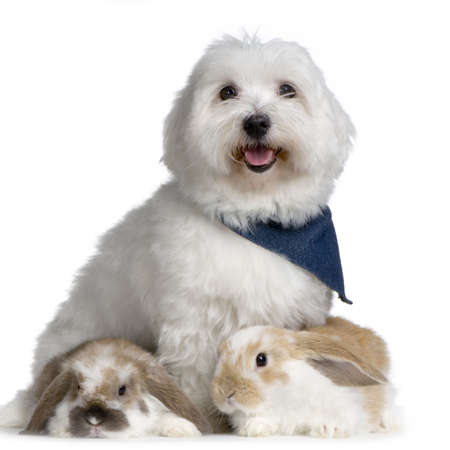 lop: Dog and two lop rabbits