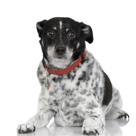 dog in front of white background photo