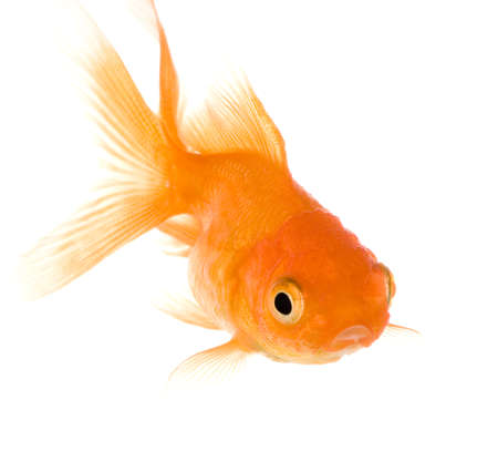 caudal: in front of a white background