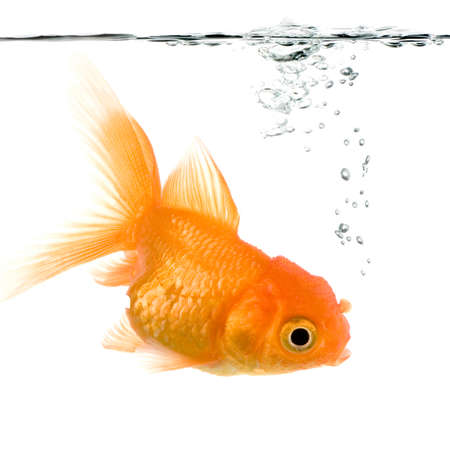 submersion: in front of a white background