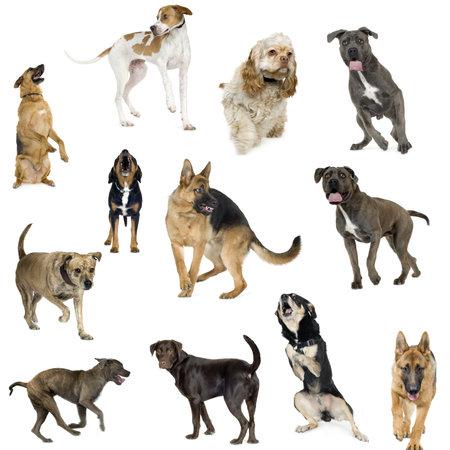 attacking: Colecci�n de 12 perros de diferentes tama�os y en diferentes posiciones frente a un fondo blanco