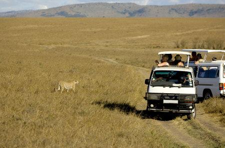 game drive: cheetah Stock Photo