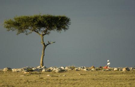 luxe:  Masai mara Kenya