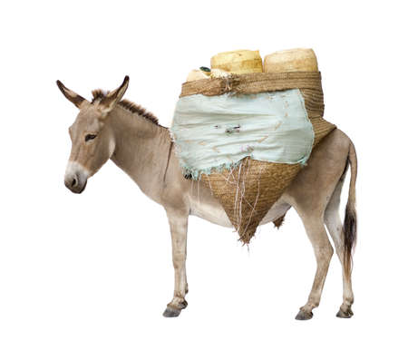 donkey: donkey carrying supplies in front of a white background Stock Photo