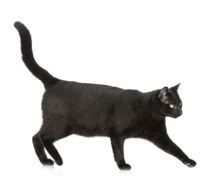 moggi: Black cat in front of a white background