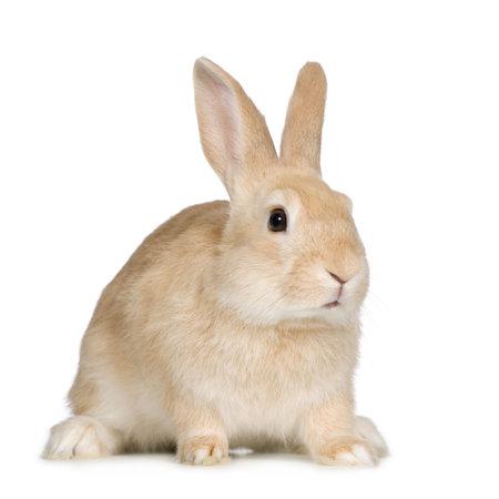 tame: Conejo delante de un fondo blanco