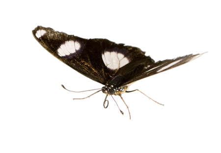 Butterfly in front of a white background Stock Photo - 3055334