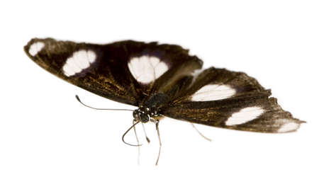 Butterfly in front of a white background Stock Photo - 3055558