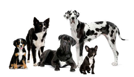 group of dogs in front of a white background photo