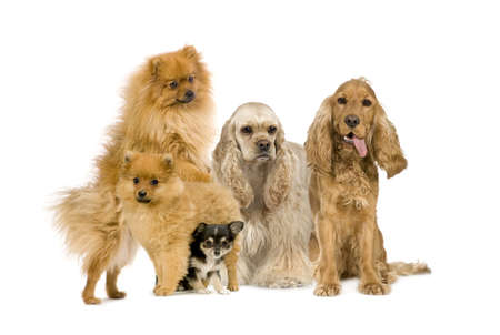 gundog: Group of dog in front of a white background