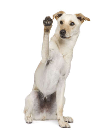 moggi: dog (18 months) in front of a white background Stock Photo
