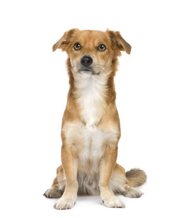 moggi: dog in front of a white background