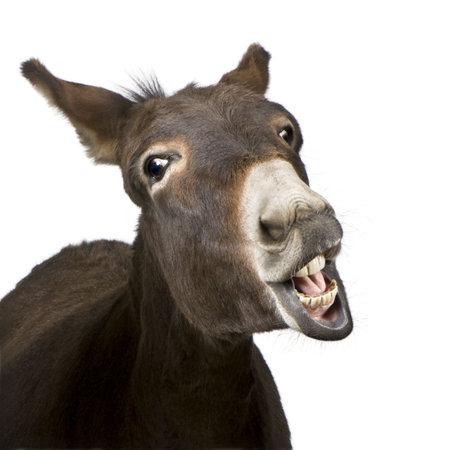 culo: burro (4 a�os) delante de un fondo blanco Foto de archivo