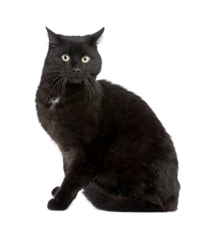 black European Shorthair cat (5 years) in front of a white background photo