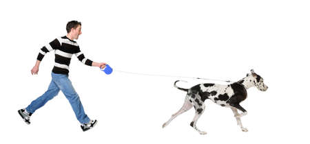 lead: Man walking his dog (Great Dane 4 years) in front of a white background