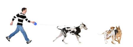 spotted dog: Man walking his dog (Great Dane 4 years) in front of a white background