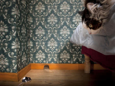 interrior: Cat and mouse in a luxury old-fashioned roon