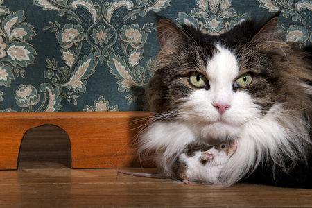 De chat et de souris dans un luxe d'antan roon