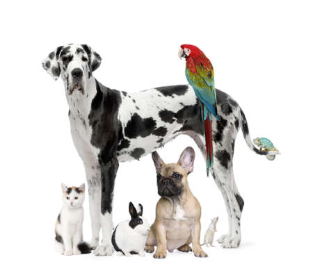 lapin blanc: Groupe d'animaux de compagnie - chien, chat, oiseau, reptile, lapin - devant un fond blanc