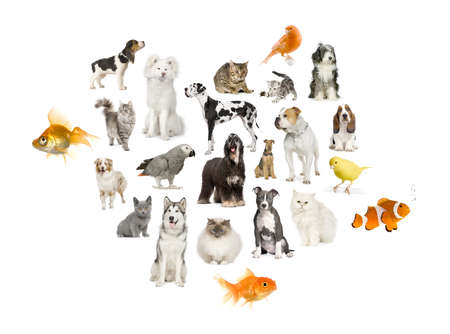 Arrangement of 22 domestic animals in front of a white background Stock Photo - 4568658
