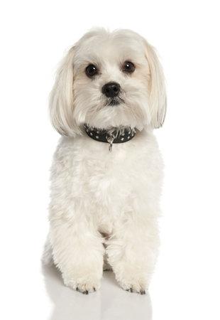 moggi: dog (2 years old)