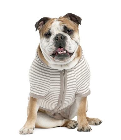 perros vestidos: Bulldog Ingl�s (15 mmonths de edad) en frente de un fondo blanco