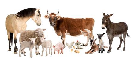 cabras: grupo de animales de granja: vacas, ovejas, caballo, asno, pollo, cordero, oveja, cabra, cerdo delante de un fondo blanco