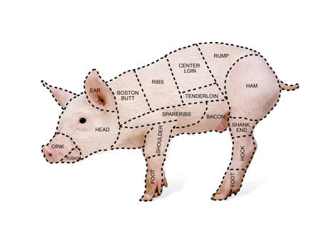 pig tails: Butchers pig chart in front of a white background