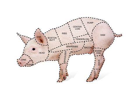 De slager varkens grafiek ten overstaan van een witte achtergrond Stockfoto