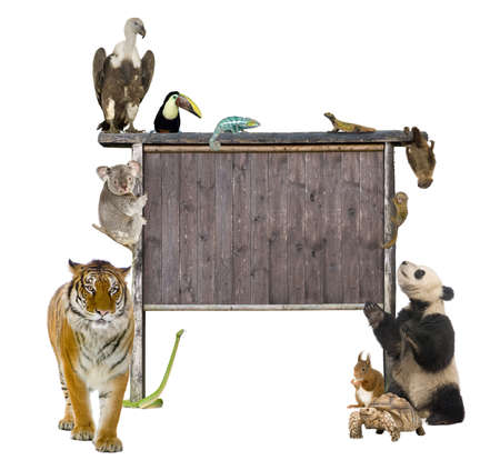 Group of wild animals around a blank wooden sign in front of a white background photo
