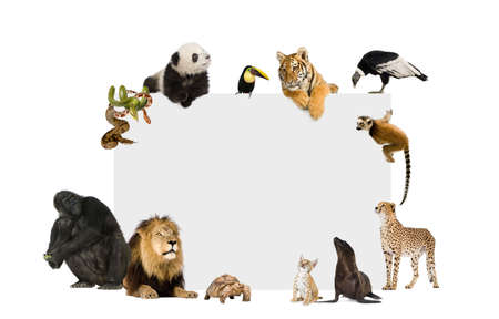Group of wild animals around a blank poster in front of a white background