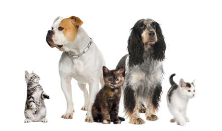 Group of pets : dogs and cats in front of a white background Stock Photo - 4934633