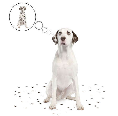 its: Dalmatian shedding its spots in front of a white background