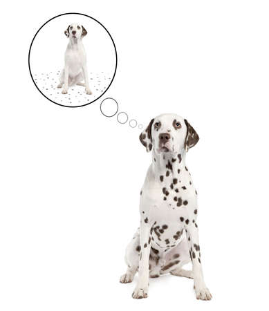 to metamorphose: Dalmatian shedding its spots in front of a white background