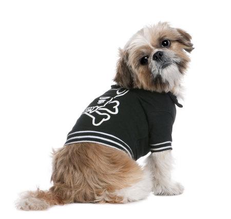 perros vestidos: Shih Tzu vestido beige-up (6 a�os) delante de un fondo blanco