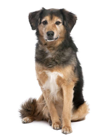 11 years: brown and black Mixed-Breed Dog sitting and facing at the camera (11 years old) in front of a white background