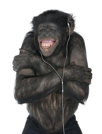 listening to music: Monkey escuchar m�sica con el auricular blanco delante de un fondo blanco (Mixed-Breed entre el chimpanc� y el bonobo (20 a�os))