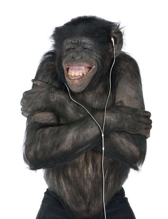 20 years old: Monkey listening music with his white headset  in front of a white background (Mixed-Breed between Chimpanzee and Bonobo (20 years old))