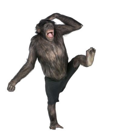 chimpansee: aap monkeying en schreeuwen op een voet (Mixed-Breed tussen de chimpansee en de bonobo) (20 jaar oud) voor een witte achtergrond