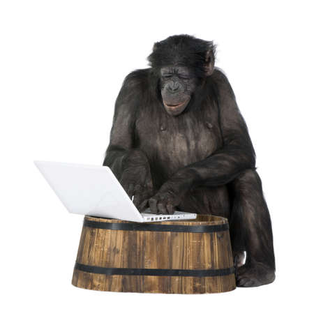 20 years old: monkey (Mixed-Breed between Chimpanzee and Bonobo) playing with a laptop (20 years old) in front of a white background Stock Photo