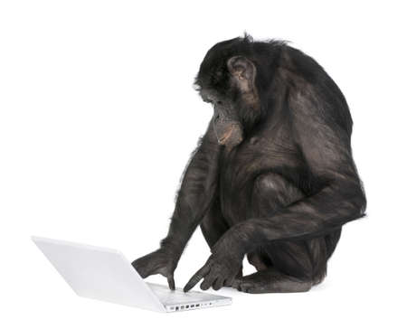 monkey (Mixed-Breed between Chimpanzee and Bonobo) playing with a laptop (20 years old) in front of a white background Stock Photo