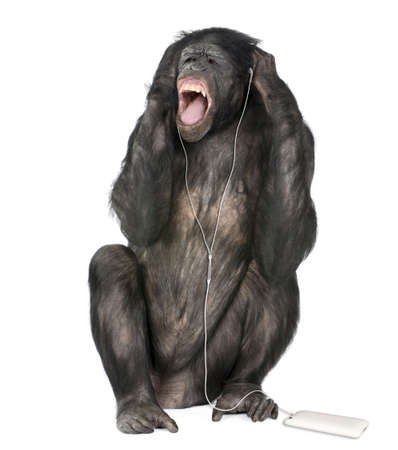 Mixed breed between Chimpanzee and Bonobo listening to music, 20 years old, in front of white background, studio shot  photo