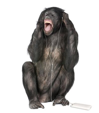 bonobo: Raza mixta entre el chimpanc� y el bonobo escuchar m�sica, 20 a�os, delante de fondo blanco, foto de estudio