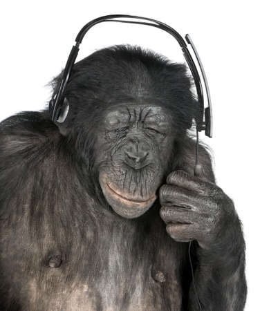 20 years old: Monkey listening music closed eyes with his black headset  in front of a white background (Mixed-Breed between Chimpanzee and Bonobo (20 years old))
