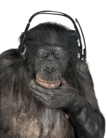 chimpansee: Monkey muziek luisteren met gesloten ogen zijn zwarte hoofdtelefoon voor een witte achtergrond (Mixed-Breed tussen de chimpansee en de bonobo (20 jaar oud)) Stockfoto